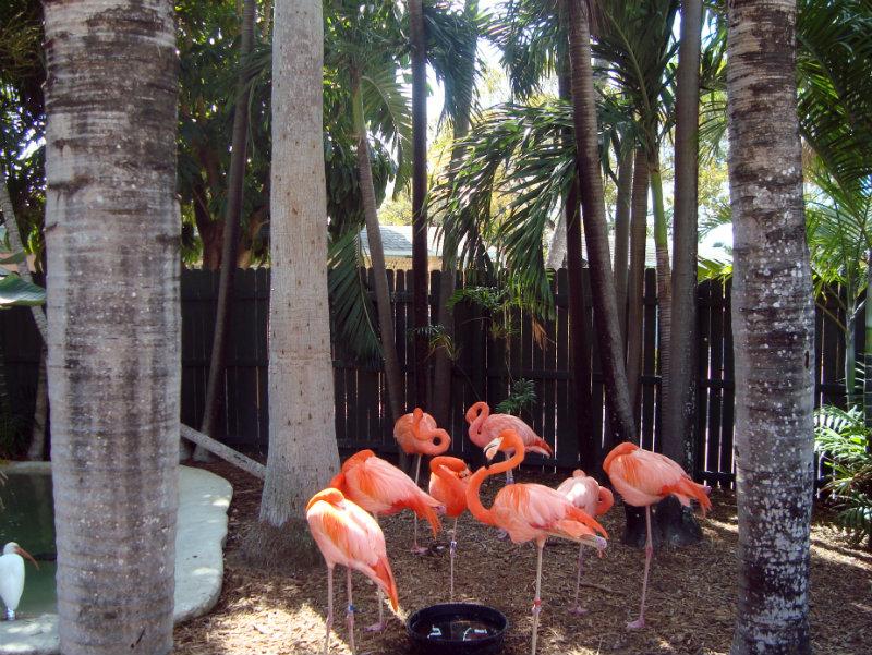 DSC06485-Miami
